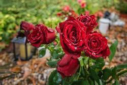 Rosen auf dem Friedhof