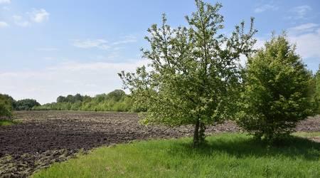 Bodenvorbereitende Maßnahmen auf der Landwiese