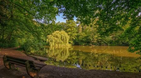 Mit 560 zusätzlichen Bäumen soll es in der Fasanerie noch grüner werden.