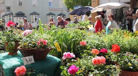 Blumen, Kräuter und Gewürze gab es reichlich zur Köthener Gartenschau.