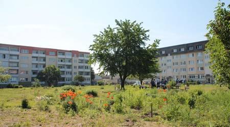 "Die ehemalige Kleingartensparte ""Sonneneck"""