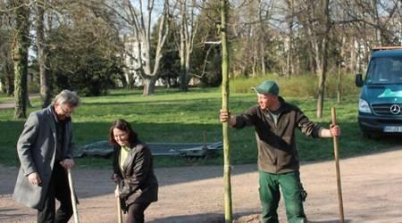 Landschaftsarchitekt Uwe Merz, Umweltamtsmitarbeiterin Sybille Schreiber und ein Mitarbeiter der Firma Kupiec beim Pflanzen der Ludwigseiche.