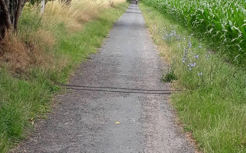 Die verlegte Radzählanlage am R1.